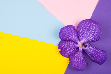 Beautiful purple orchid flower on a bright multicolored background (top view, copy space for your text) Stok Fotoğraf