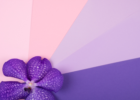 Beautiful purple orchid flower on a multicolored background being a palette of different colors from the pink color to the purple color (top view, copy space for your text) Stockfoto - 112881244