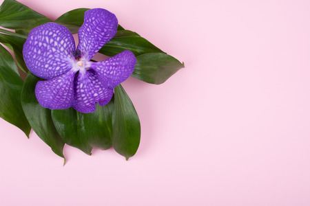Beautiful purple orchid flower isolated on a pastel pink background (top view, copy space on the right for your text) Stock Photo
