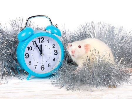Cute white rat and a blue clock showing almost midnight as a symbol of the 2020 New Year of the White Metal Rat (against the white wooden background and silver tinsel)