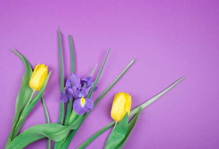 Beautiful yellow tulips and a purple iris flower on a purple background, top view (copy space on the right for your text)