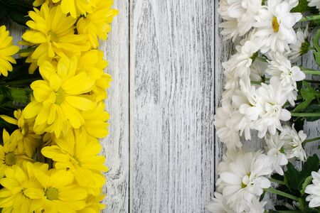 Rows of yellow and white chrysanthemum flowers on a worn gray wooden background (with copy space in the center for your text) Stockfoto