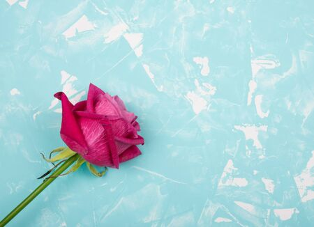 Beautiful pink and red rose on a light blue cracked concrete or marble background (with copy space for your text), top view Standard-Bild - 135515101