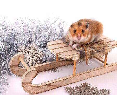 Funny cute Syrian hamster sitting on a toy Christmas sleigh (against the background of Christmas decorations)