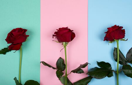 Three bright red roses on a multicolored paper background of pastel colors (top view) Standard-Bild - 136412181
