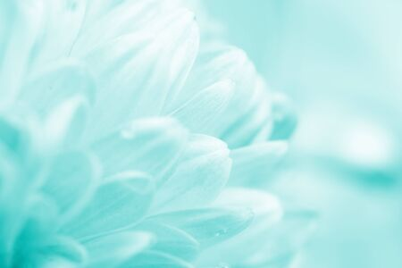 Blurred silhouettes of petals of beautiful white flowers toned in the turquoise color (copy space for your text), soft focus, springtime concept Standard-Bild