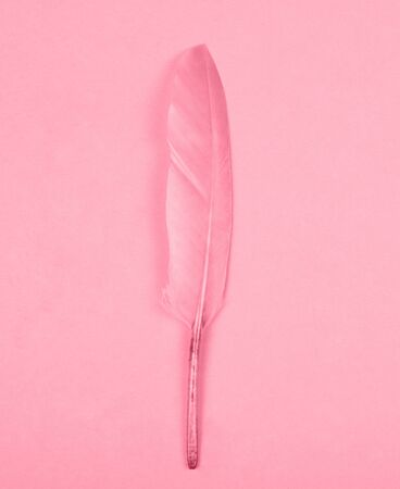 Feather as a quill pen on a pastel pink background, in pink tones (minimal concept, top view) Standard-Bild - 139582129