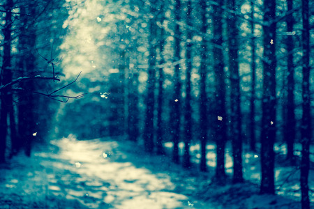 focus on background: abstract background of intentionally out of focus, or defocused falling snow against a winter forest. Blue toning. Stock Photo