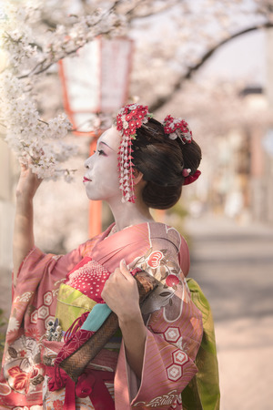 Geisha in kimono posing in profile admiring cherry blossoms at sunset.