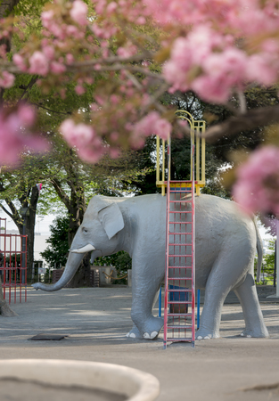 Elephant sculpture under the cherry blossoms of Asukayama Park in the Kita district, north of Tokyo. 에디토리얼