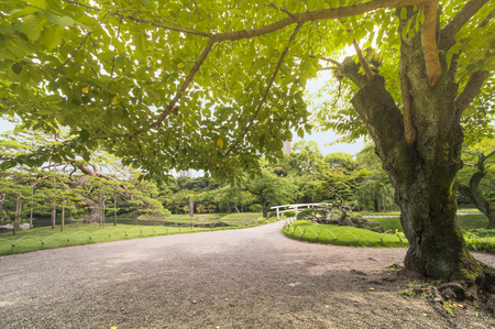 Small Japanese bridge of Koishikawa Korakuen Park in Tokyo surrounded by beautiful pines, maples and cherry trees. It separates the main lake Osensui, which is an evocation of Lake Biwa and the Hasuike Stall filled with sacred lotus whose buds are about t