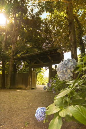 Rikugien Gardens interior door in Tokyo made of wood and tiles of very simple style reflecting the way of life of the warriors who create this garden. Purple hydrangeas are illuminated by the suns r