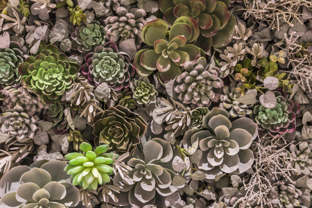 Plastic synthetic reproduction of succulents Flower Arrangement in very high concentration.