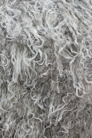 Highly detailed background texture of gray fur made of synthetic animal long  wavy and curly hair.