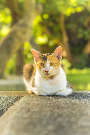 orange and white tabby cat lying staring at the lens Stok Fotoğraf - 127529049