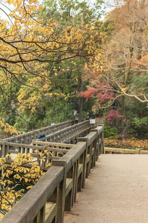 Autumn foliage overlooking the wooden bridge of the japanese temple Benzaiten in the forest parc of Inokashira in Kichijoji city
