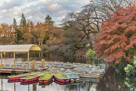 A collection of boats floating in the pond of Kichijoji Inokashira Park