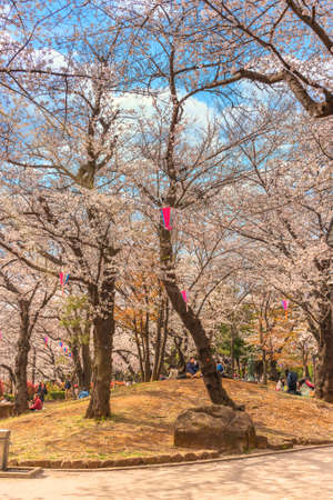 tokyo, japan - march 30 2020: Sitting of Japanese families enjoying Somei Yoshino pink Cherry blossoms trees around the Kannon Bodhisattva statue of Asukayama Park during the Hanami Festival in Tokyo. 에디토리얼