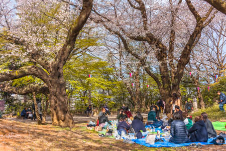 tokyo, japan - march 30 2020: Outdoor party of Japanese couples enjoying Somei Yoshino pink Cherry blossoms trees of Asukayama Park at Oji city during Hanami Spring Festival in the Kita ward of Tokyo.