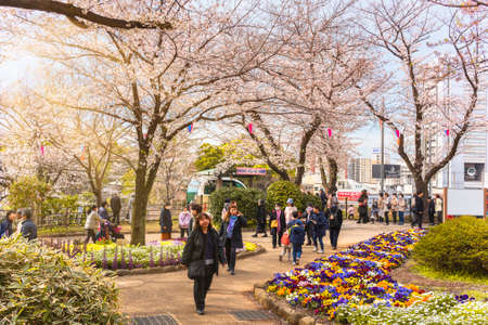 tokyo, japan - march 30 2020: People arriving by the monorail Asukarugo for enjoying the Somei Yoshino pink Cherry blossoms trees of Asukayama Park at Oji city during the Hanami Spring Festival. 에디토리얼