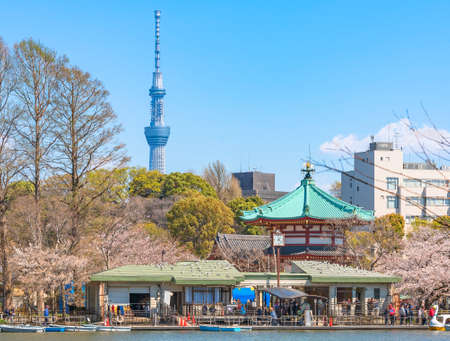 Shinobazu pond of Kaneiji temple surrounded by cherry blossoms trees where people enjoying Ueno park hanami festival with the Japan tallest tower Tokyo Skytree in back.
