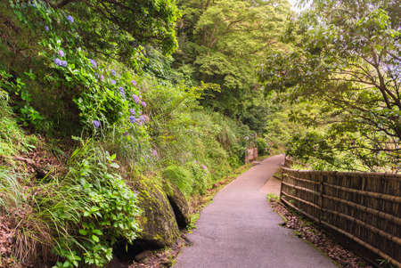 Sun beams through the foliage of the hiking path bordered with moss and hydrangeas flowers leading through the forest of Mount Nokogiri to the Daibutsu of Nihonji temple.