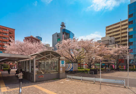 tokyo, japan - April 07 2020: Entrance of the Komagome subway station in front of the Someiyoshino Sakura Memorial Park with cherry blossoms at the North exit of Komagome station.