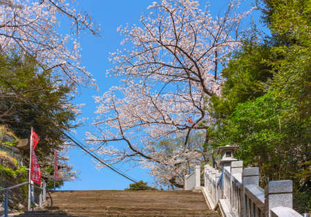 tokyo, japan - april 13 2020: Cherry blossoms tree at top of the famous stairs of success of the samurai Magaki Heikurou of the Shintoist Atago shrine on the highest mountain of Tokyo named Mt. Atago.