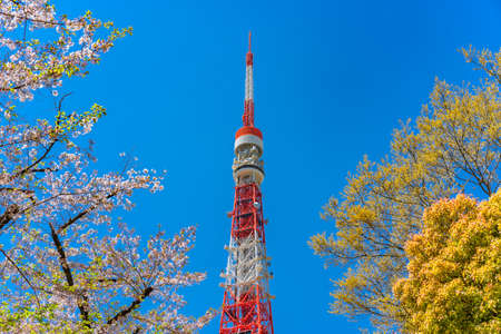tokyo, japan - april 13 2020: Sightseeing landmark Tokyo tower called also Nippon denpatō or Japan Radio Tower towering between the cherry blossoms branches of the Shiba-koen park of Minato city.