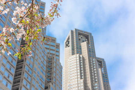 tokyo, japan - april 08 2020: Yoshino cherry blossoms branch in front of the tower of the Tokyo Metropolitan Government Building during the hanami festival of blossoming season at spring in Shinjuku.