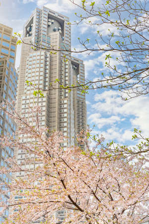 tokyo, japan - april 08 2020: Yoshino cherry blossoms branch overlooked by the tower of the Tokyo Metropolitan Government Building during the hanami festival of blossoming season at spring in Shinjuku.