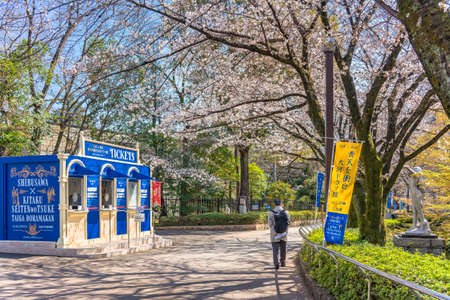 tokyo, japan - march 23 2021: Cherry blossoms overlooking the ticket booth during exhibition dedicated to Shibusawa Eichi in front of the sculpture of Seibo Kitamura in the alley of Asukayama park.