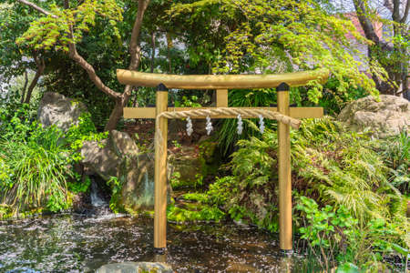 tokyo, japan - march 25 2021: Japanese golden gate named torii adorned with a sacred straw rope called shimenawa in the pond of Atago shrine covered with fallen cherry blossoms petals under a maple.