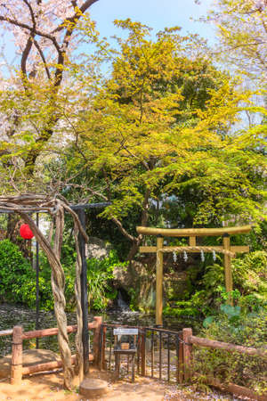 tokyo, japan - march 25 2021: Pergola and Japanese gold foil torii gate adorned with a sacred shimenawa straw rope in the pond of Atago shrine covered with fallen cherry blossoms petals under a maple.