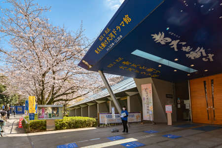 tokyo, japan - march 23 2021: Yoshino cherry blossoms overlooking the entrance of exhibition dedicated to the Japanese historical drama television series about Shibusawa Eiichi in Asukayama park.