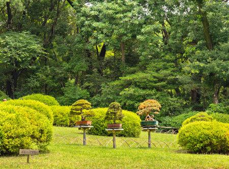 tokyo, japan - june 25 2021: Three Japanese bonsai art trees exhibited on the lawn of the hill of the Meiji Jingu Inner Garden dedicated to Emperor Meiji and Empress Shōken.