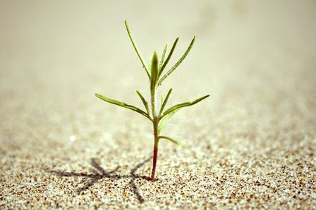 seed growing: close-up of sprout coming out of the sand on the beach. The begining of new live.