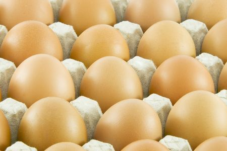 Many fresh rural eggs packed in cardboard container photo