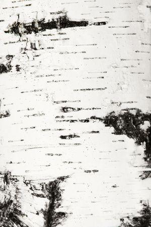 Natural bark of birch texture. Closeup Stock Photo