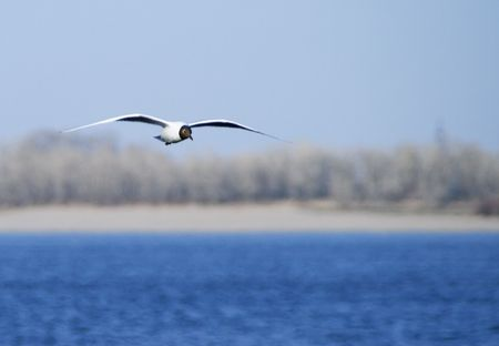 Seagull  flying over the river over big blue sky background Stock Photo - 5079840
