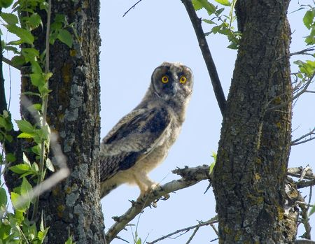 Portrait of owl with yellow eyes photo
