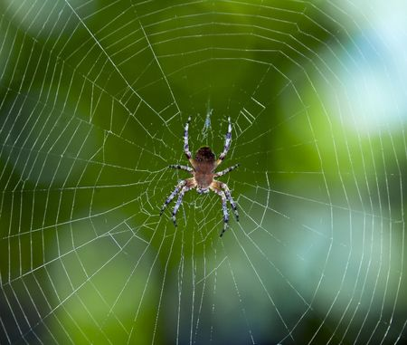 Spider on the web over green background Imagens