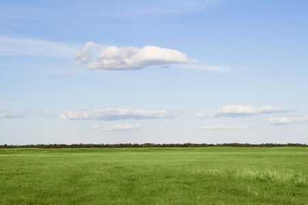 Green grass meadow, the blue sky and white clouds Stock Photo - 5771391