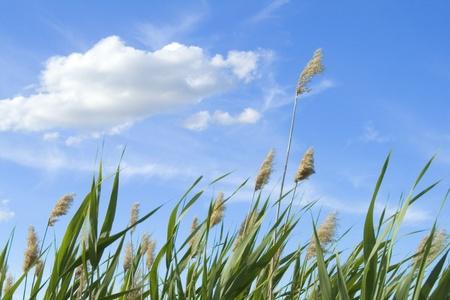 風の日の曇り空に対して高リード