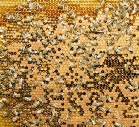 swarm of bees produce honey photo