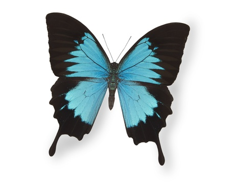 Blue butterfly isolated on white Stock Photo - 10103285