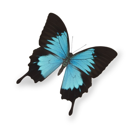 flit: Blue butterfly isolated on white