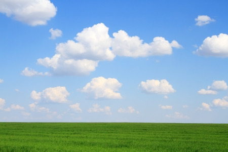 Meadow with green grass and blue sky with clouds Stock Photo - 14308960