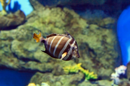 tropical Fish on a coral reef Stock Photo - 16479893
