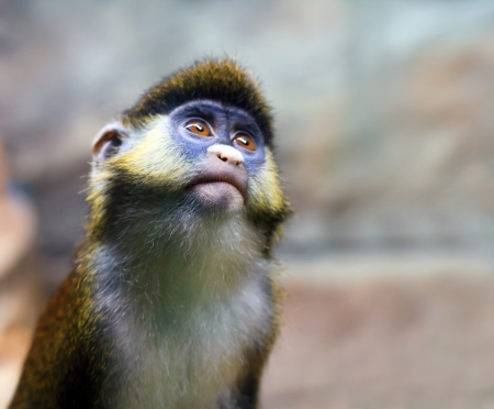 Squirrel monkey in a branch Stock Photo